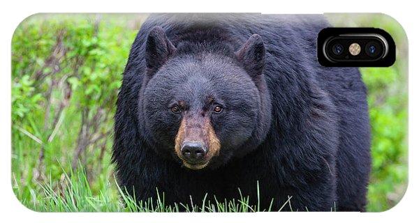Wild Black Bear IPhone Case