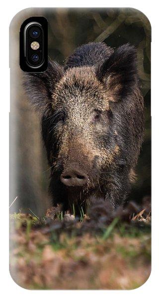 Wild Boar Sow Portrait IPhone Case