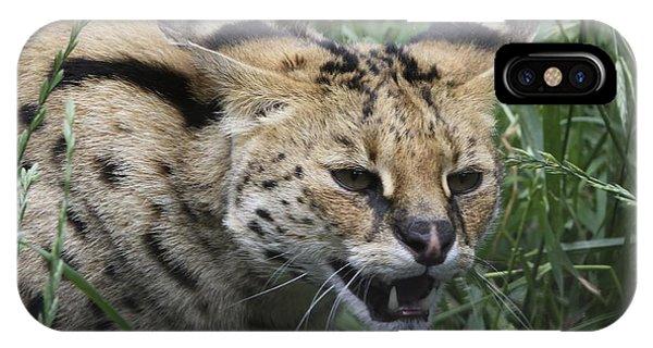 Wild Cat IPhone Case