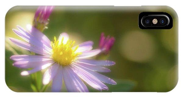 Wild Chrysanthemum IPhone Case