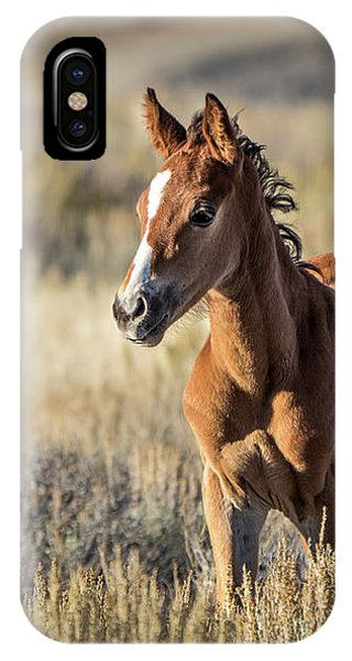 Wild Colt In Sand Wash Basin - Northwest Colorado IPhone Case