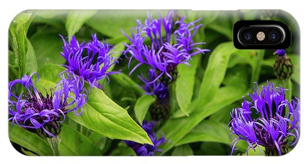 Wild Cornflowers In Iceland IPhone Case