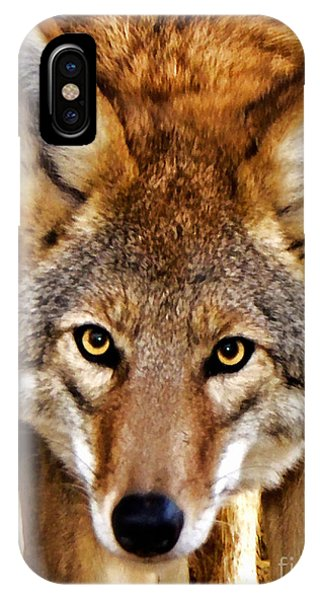 Wild Coyote IPhone Case