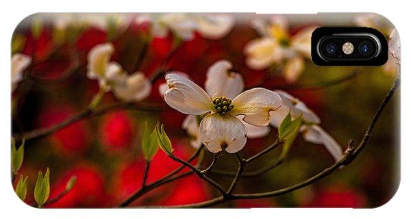 Wild Dogwood And Red Azaleas IPhone Case
