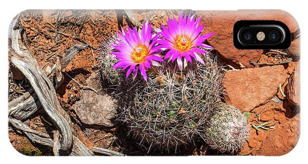 Wild Eyed Cactus IPhone Case