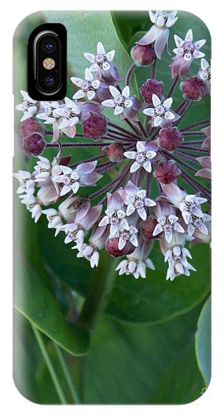 Wild Flower Star Burst IPhone Case