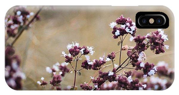 Petals iPhone Case - Wild Herbs  #herbs by Mandy Tabatt