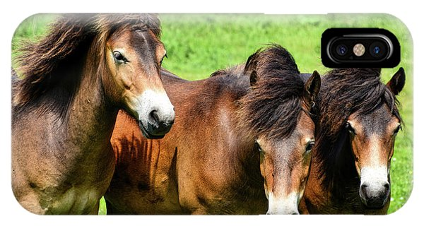 Wild Horses 2 IPhone Case