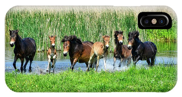 Wild Horses 6 IPhone Case
