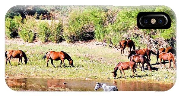 Wild Horses Grazing At Waterhole  IPhone Case