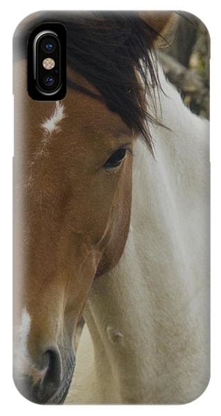 IPhone Case featuring the photograph Wild Horses Of Nevada 3 by Catherine Sobredo