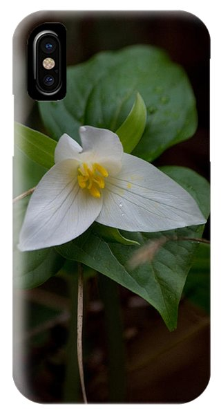 Wild Lily IPhone Case
