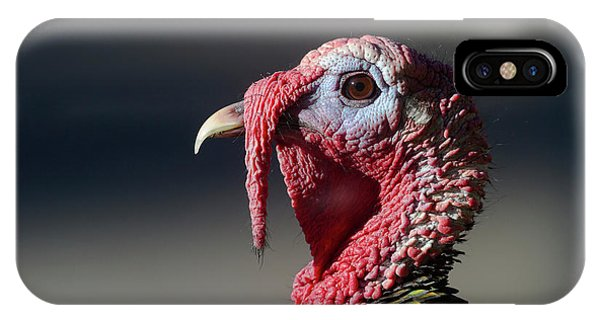 Wild Merriams Turkey Portrait  IPhone Case