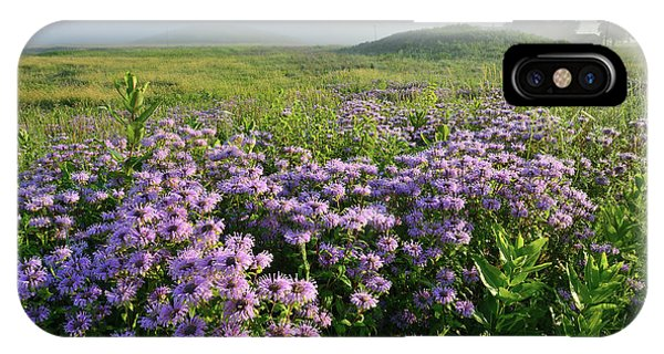 Wild Mints Galore In Glacial Park IPhone Case
