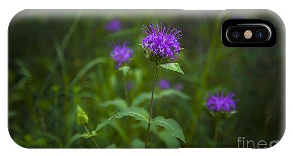 Wild Monarda IPhone Case