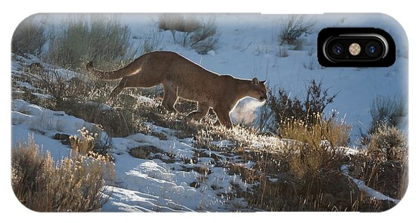 Wild Mountain Lion Running At First Light IPhone Case