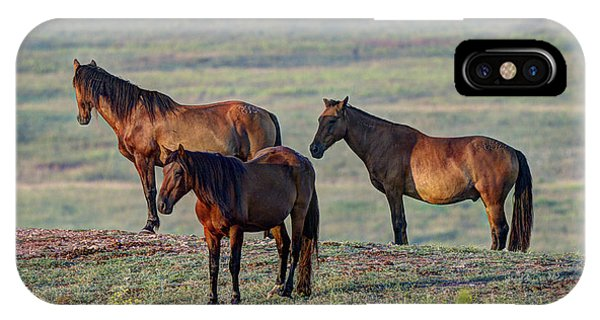Wild Mustang At Teter Rock IPhone Case