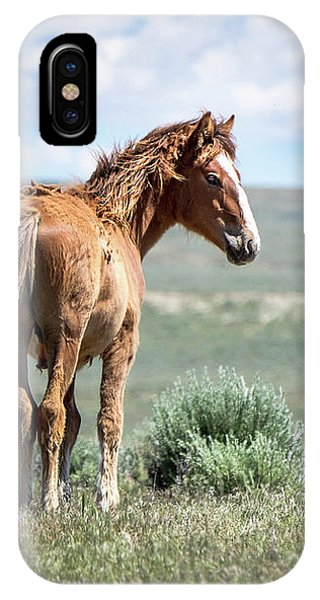 Wild Mustang Colt Of Sand Wash Basin IPhone Case