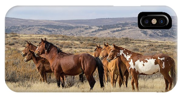 Wild Mustang Family Band In Sand Wash Basin IPhone Case