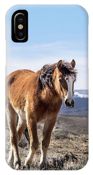 Wild Mustang Filly Of Sand Wash Basin IPhone Case