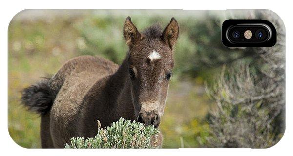 Wild Mustang Foal IPhone Case