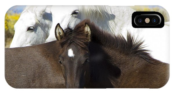 Wild Mustang Herd IPhone Case