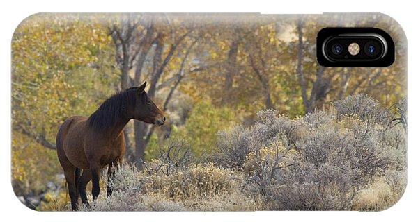 Wild Mustang Horse IPhone Case