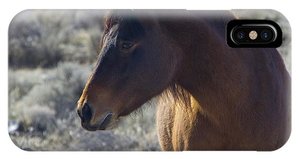 Wild Mustang Mare IPhone Case