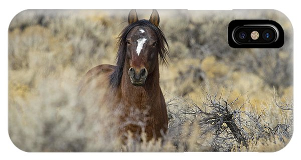 Wild Mustang Stallion IPhone Case