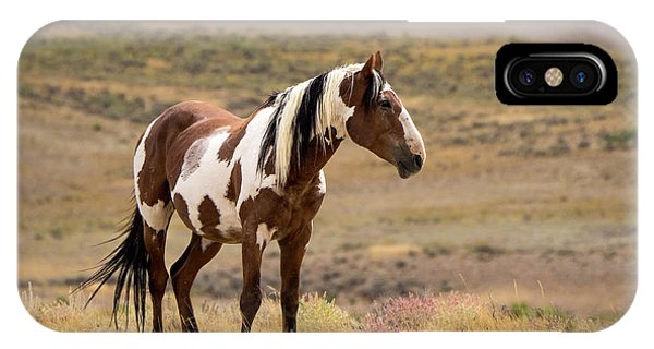 Wild Mustang Stallion Picasso Of Sand Wash Basin IPhone Case
