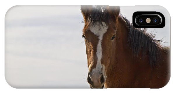 Wild Mustang Yearling IPhone Case