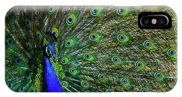 Wild Peacock IPhone Case