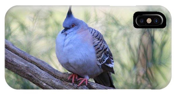 Pigeon iPhone Case - Wild Pigeon by Emma Brown