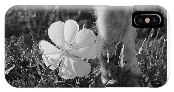 Wild Primrose With Dog's Foot IPhone Case