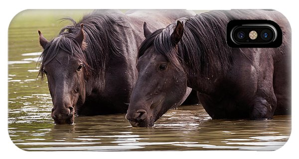 Wild Stallions At The Water Hole IPhone Case