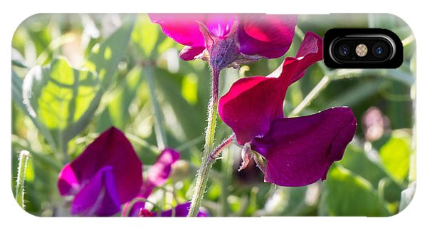 Wild Sweet Peas 3382 IPhone Case