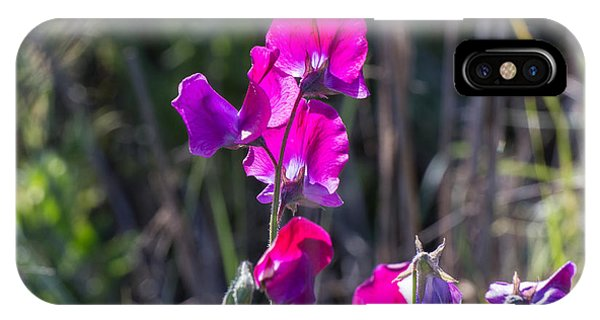 Wild Sweet Peas 3384 IPhone Case