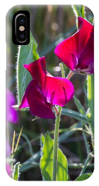 Wild Sweet Peas 3410 IPhone Case