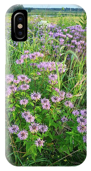 Wildflower Bouquet In Glacial Park IPhone Case