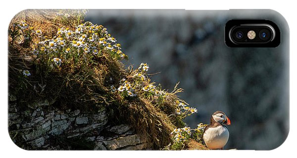 IPhone Case featuring the photograph Wildflowers And Puffin  by Cliff Norton