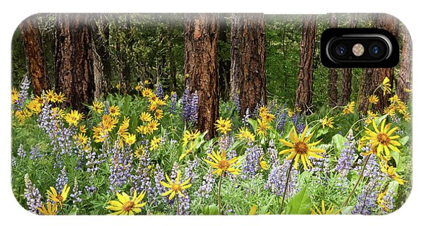 Balsamroot And Lupine In A Ponderosa Pine Forest IPhone Case