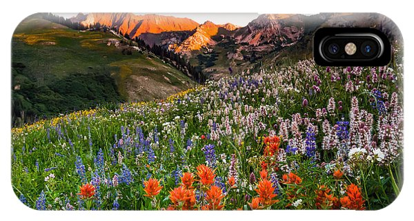 Wildflowers In Albion Basin. IPhone Case