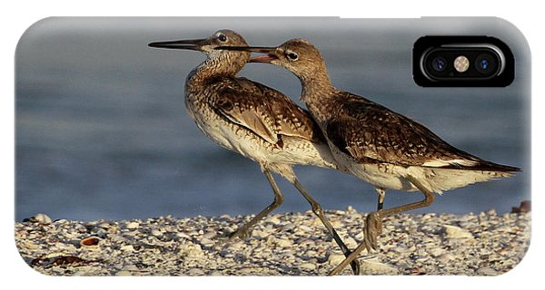 Willet Fight IPhone Case