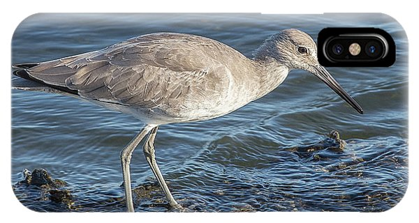Willet In Winter Plumage IPhone Case