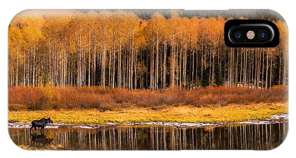 Willow Lake Moose IPhone Case