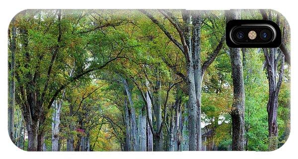 Willow Oak Trees IPhone Case