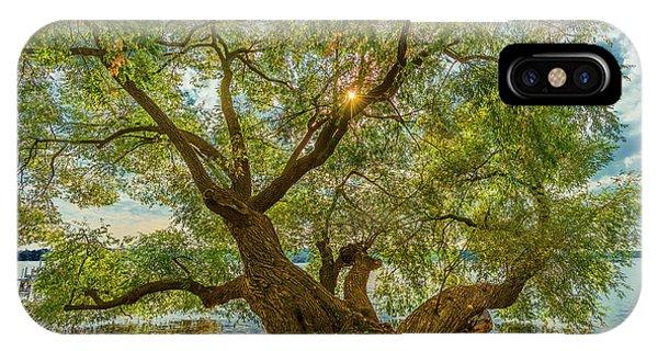 Willow Tree - Lake Geneva Wisconsin IPhone Case