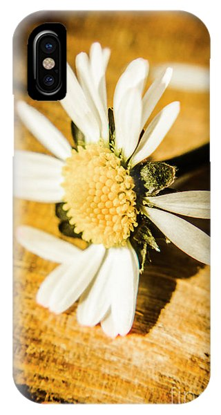 Daisy iPhone Case - Wilt by Jorgo Photography - Wall Art Gallery