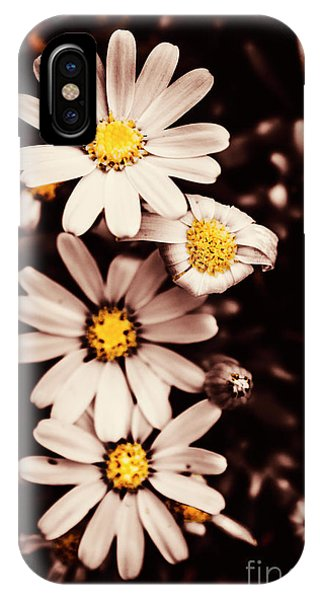 Petals iPhone Case - Wilting And Blooming Floral Daisies by Jorgo Photography - Wall Art Gallery