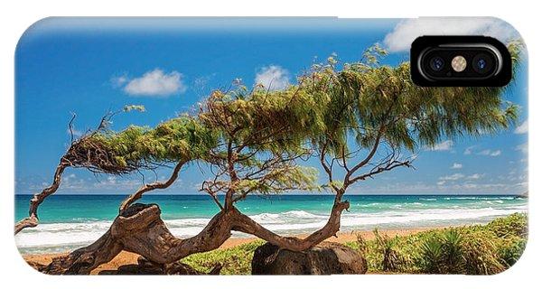 Hawaiian iPhone Case - Wind Blown Tree by Brian Harig